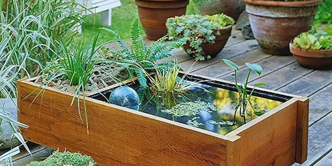 Container Water Gardens for Small Spaces - Landscaping Netwo